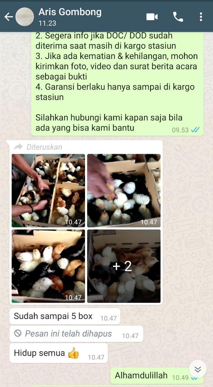 Testimoni Pak Aris Gombong Jual Ayam Hias HP : 08564 77 23 888 | BERKUALITAS DAN TERPERCAYA PROMO JOPER FIX