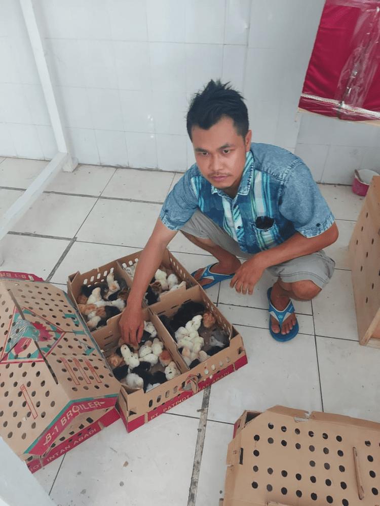 Testimoni DOC Joper Jual Ayam Hias HP : 08564 77 23 888 | BERKUALITAS DAN TERPERCAYA PROMO JOPER FIX