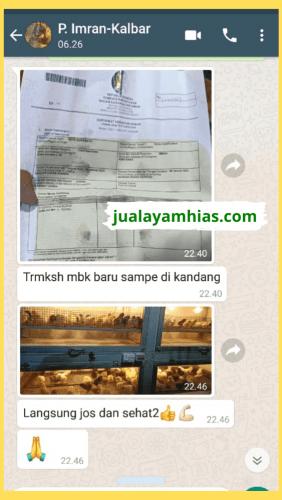 Testimoni 1 jah Jual Ayam Hias HP : 08564 77 23 888 | BERKUALITAS DAN TERPERCAYA PROMO DOC JOPER