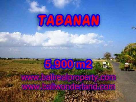 TANAH MURAH DI TABANAN BALI DIJUAL TJTB131 - INVESTASI PROPERTY DI BALI