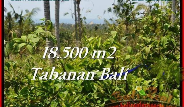 INVESTASI PROPERTY, JUAL TANAH MURAH di TABANAN TJTB232