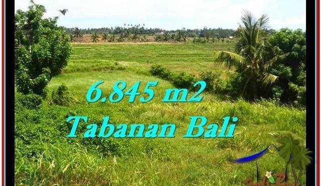 TANAH DIJUAL MURAH di TABANAN 6,845 m2 di Tabanan Selemadeg