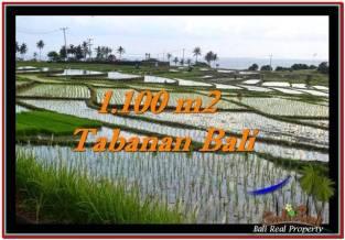 JUAL TANAH MURAH di TABANAN 1,100 m2 View sawah, laut dan gunung