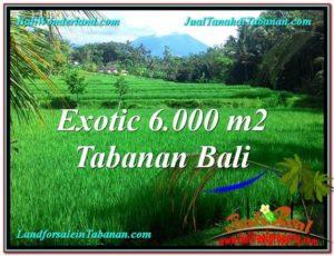 TANAH DIJUAL MURAH di TABANAN 60 Are di Tabanan Penebel