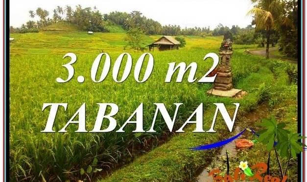 JUAL TANAH MURAH di TABANAN BALI 3,000 m2 di Tabanan Selemadeg