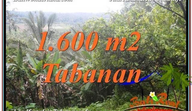 TANAH MURAH DIJUAL di TABANAN 16 Are di Tabanan Selemadeg