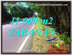 DIJUAL MURAH TANAH di TABANAN BALI 11,600 m2 di Tabanan Selemadeg