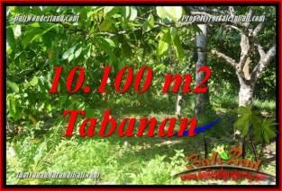 INVESTASI PROPERTI, TANAH DIJUAL di TABANAN BALI TJTB360