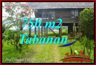 TANAH di TABANAN BALI DIJUAL MURAH 750 m2 view Kebun dan Gunung