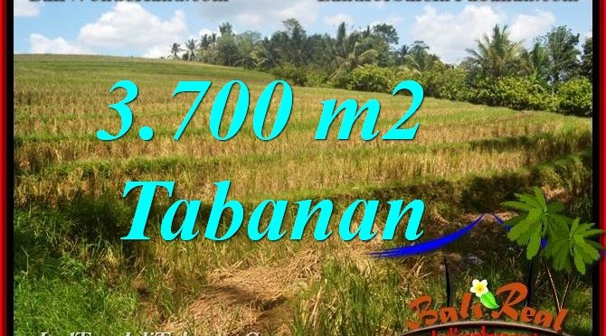 TANAH MURAH JUAL di TABANAN 3,700 m2  View Sawah dan Sungai
