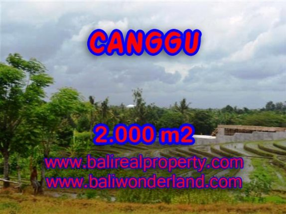 TANAH MURAH DIJUAL DI CANGGU BALI TJCG133 - PELUANG INVESTASI PROPERTY DI BALI