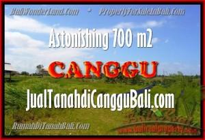 TANAH MURAH di CANGGU BALI DIJUAL 700 m2 View Sawah, lingkungan villa