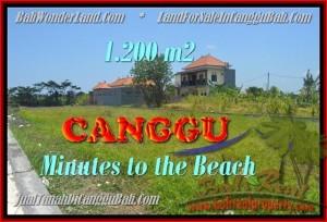 INVESTASI PROPERTI, DIJUAL MURAH TANAH di CANGGU TJCG166