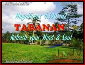 TANAH JUAL MURAH  TABANAN 45,2 Are View sawah dan kebun
