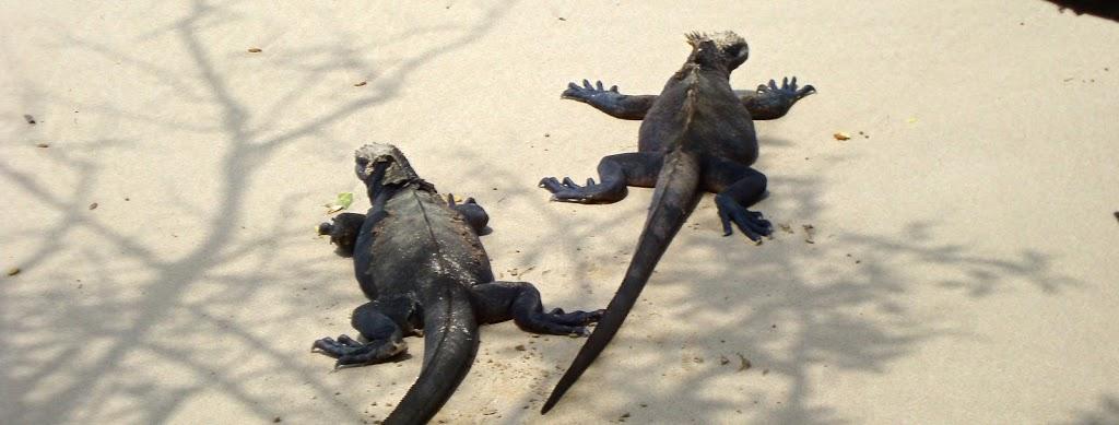 Cuanto cuesta viajar a Galapagos?