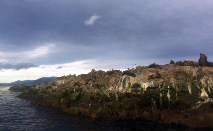 Ushuaia - Canal de Beagle - La isla de los lobos