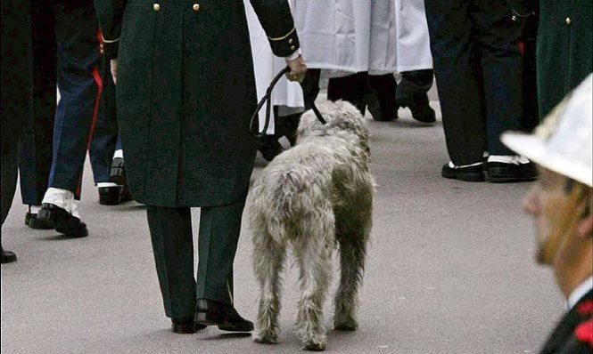 Odin, el perro de Rainiero lo acompañó, hasta el final de sus días
