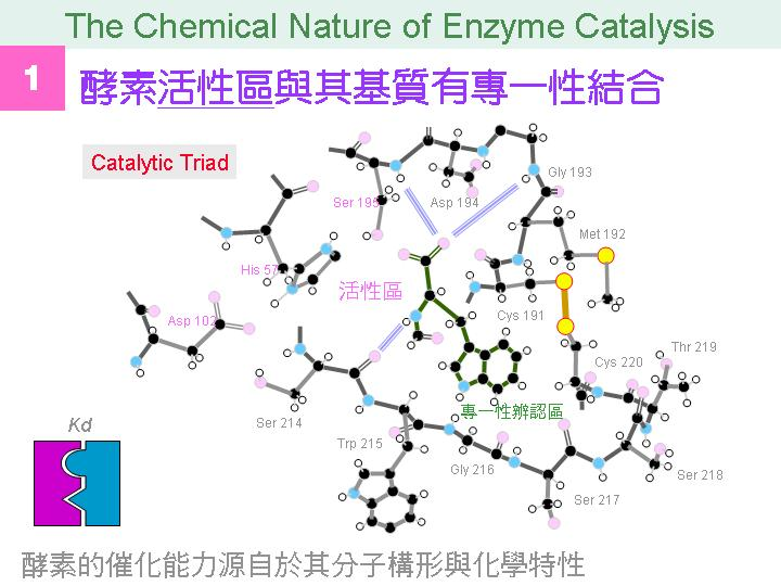 Chem Nature Of Enzyme Catalysis