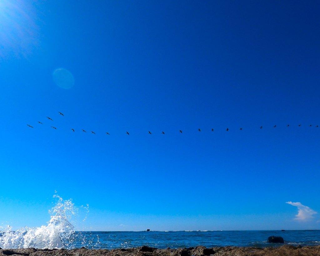 Aves desfilando en la Playa el Faro (Amor) en el Complejo Los Cóbanos