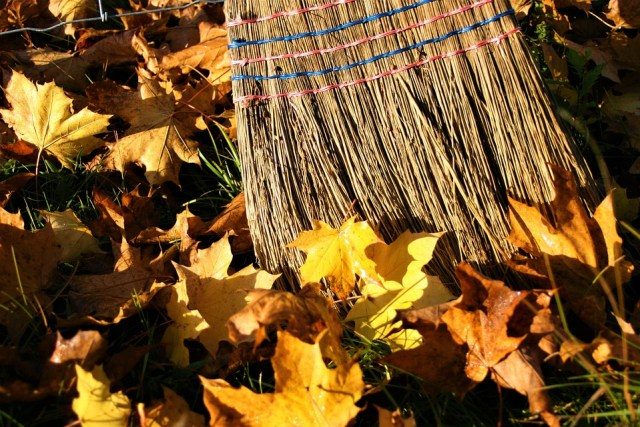 yellow-leaves-2919183_960_720