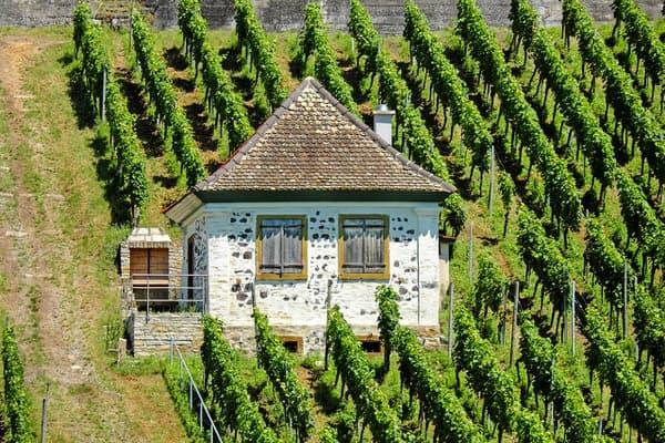 best midlife diets+housei+vineyard