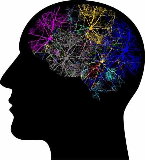 follow through+cranium+neurons