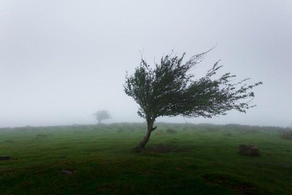 combat loneliness+lonely-tree-mahkeo-381006-unsplash