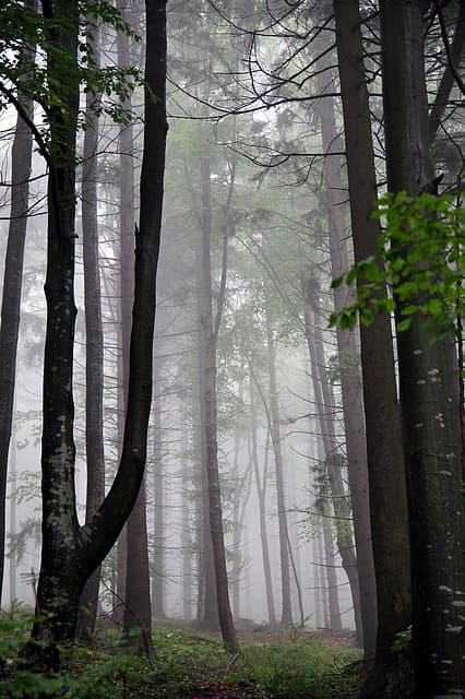 SAD and menopause+foggy-forest