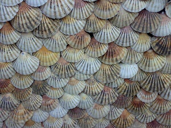 apply the enneagram+shells