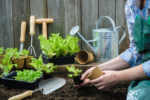 garden for health+repotting