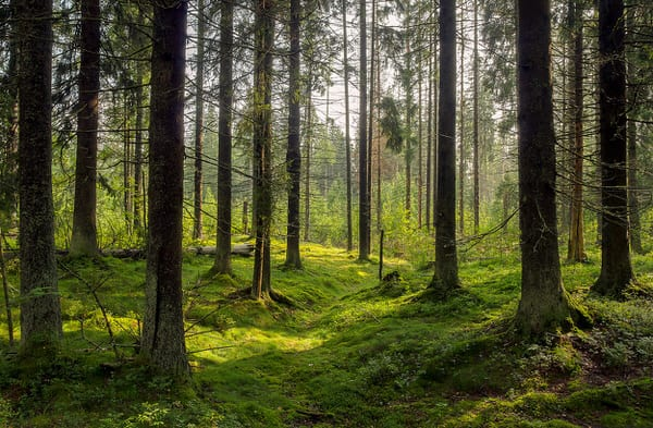cant-see-the-forest-for-the-trees