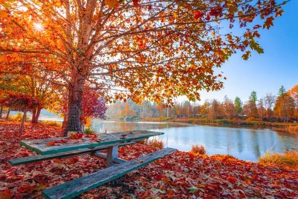 autumn-leaves-beautiful-daylight-pexels