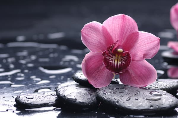 attitude of gratitude+flower-rocks-rain