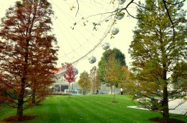 Jubilee Gardens Autumn Trees