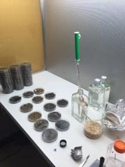 Preparing soil samples for fungal isolations