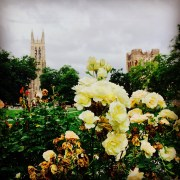 Duke's west campus in the summer time