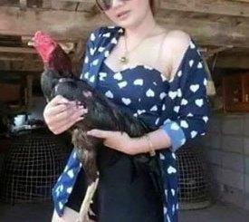 Cara Menambah Kekuatan Pada Pukulan Ayam Aduan