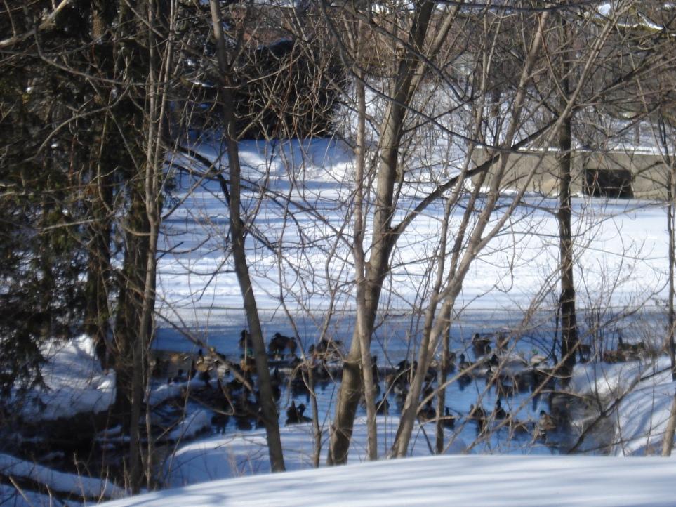 2009-january-006