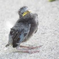 birdie5