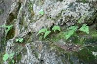 3. Ferns in rock seam.