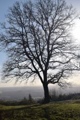 leith-hill-dorking-03-dec-2016-21