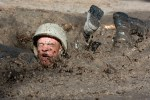mud crawl-919224_960_720
