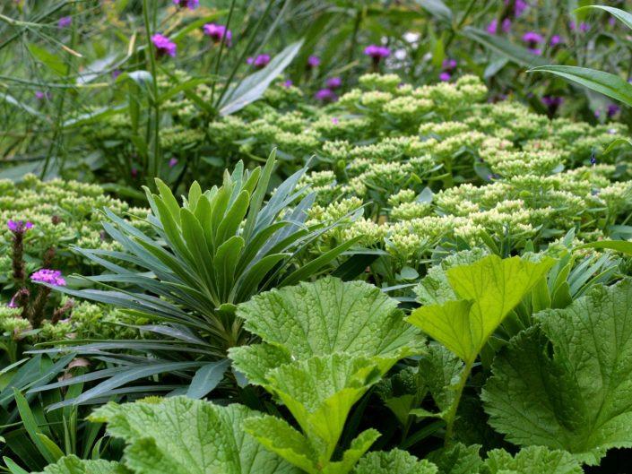 Green border Surrey garden