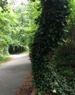 Don White Park walking trail