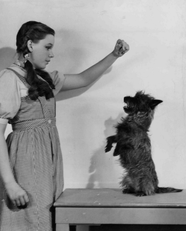 November-5,-1938-Dorthy-and-Toto