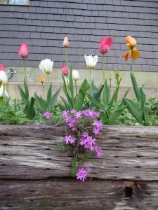 Yay, spring!