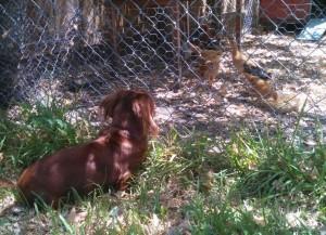 bella watching
