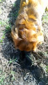 Tucker digging