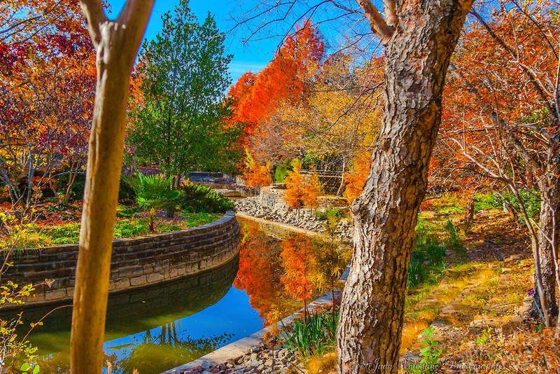 https://i1.wp.com/judyv.smugmug.com/Clark-Gardens/Fall-at-Clark-Gardens-2012/i-WFcq56D/0/L/JVP_20121120_ClarkGardens4212-L.jpg