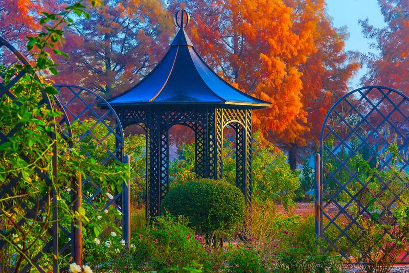 https://i1.wp.com/judyv.smugmug.com/Clark-Gardens/Fall-at-Clark-Gardens-2012/i-sPDsvmQ/0/L/JVP_20121120_ClarkGardens4107-L.jpg